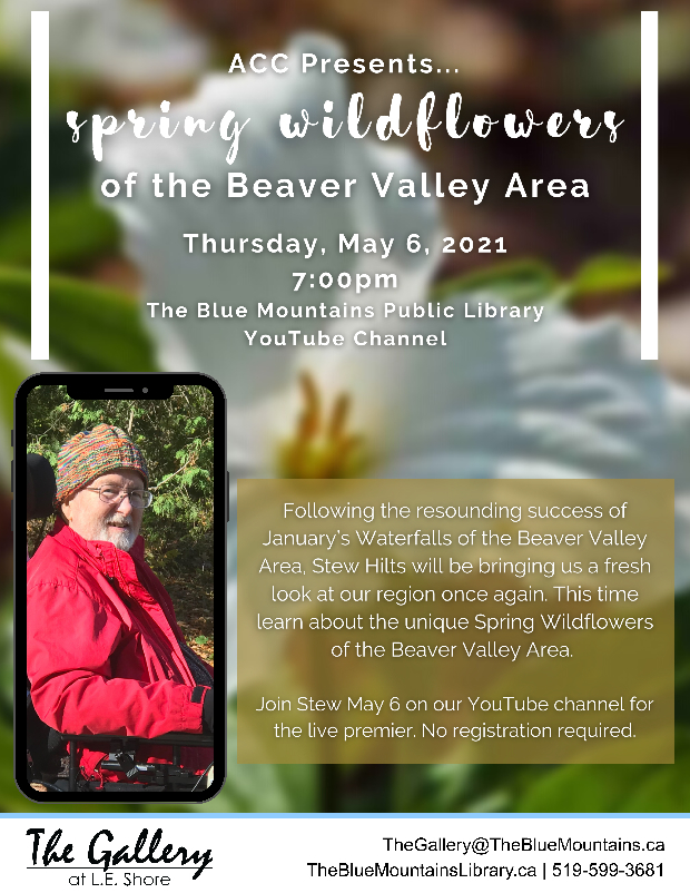 Watch the premiere as Stew Hilts gives a live YouTube talk on the unique spring flowers in the Beaver Valley. May 5 at 7 pm on the Blue Mountains Public Library YouTube channel