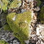 Hike___19_heart_shaped_rock_between_filman_and_wilson_thumb
