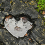 Puddle_heart_sm_thumb